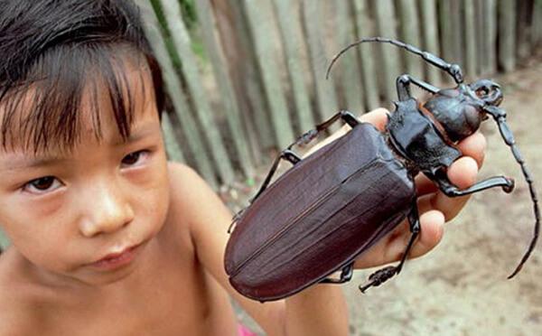 beetle-11781.jpg