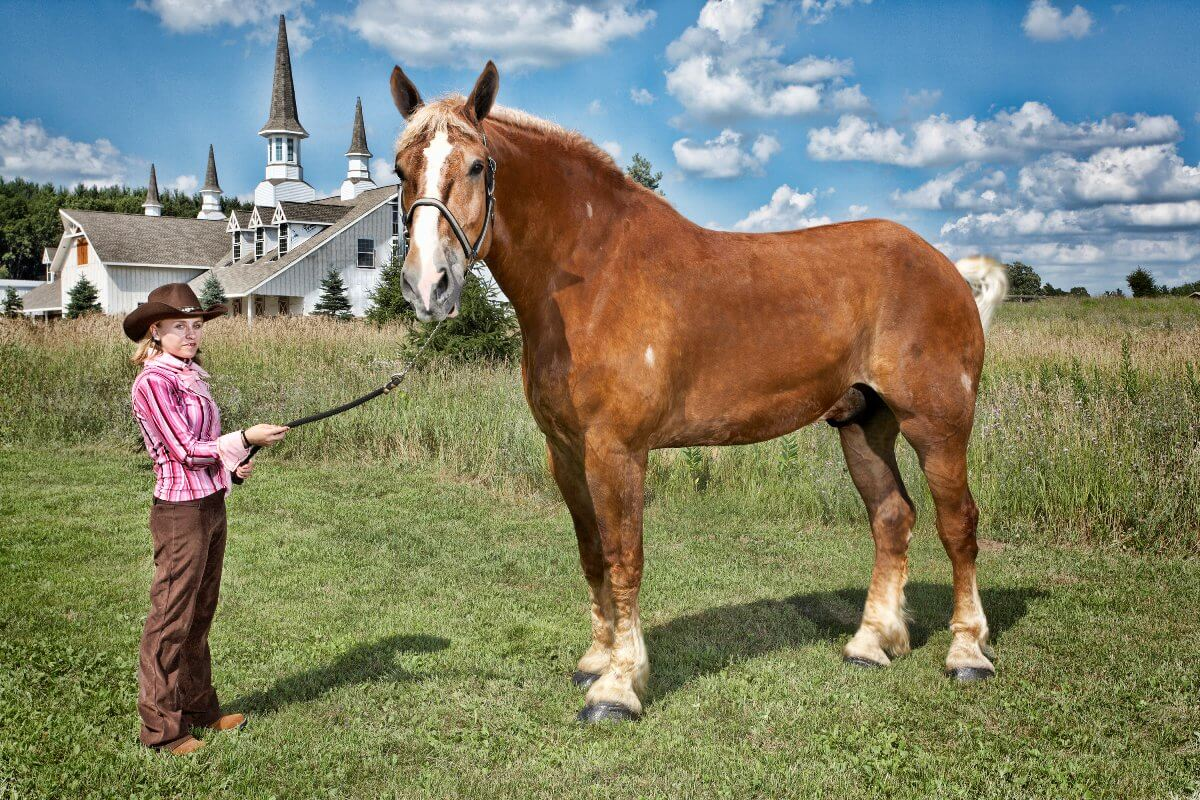 big-jake-the-horse-93066.jpg