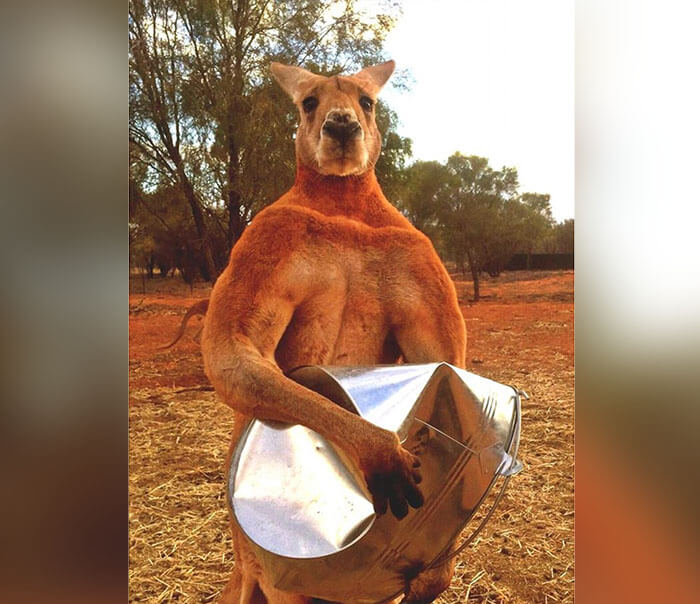 kangaroo-54743-31911.jpg