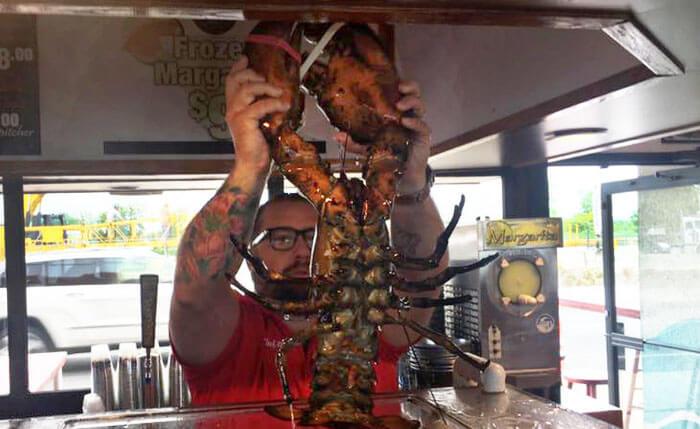 lobster-31939-43852.jpg