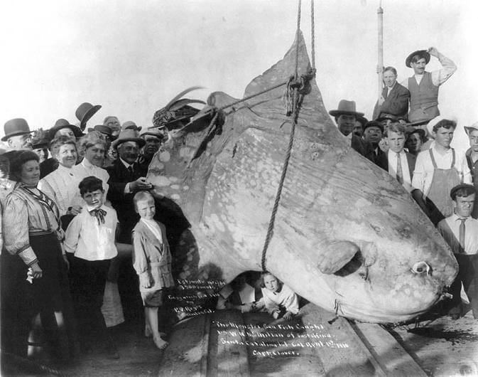 sunfish-51722.jpg