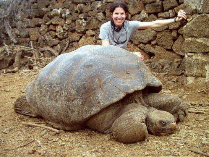 tortoise-52184-42936.jpg