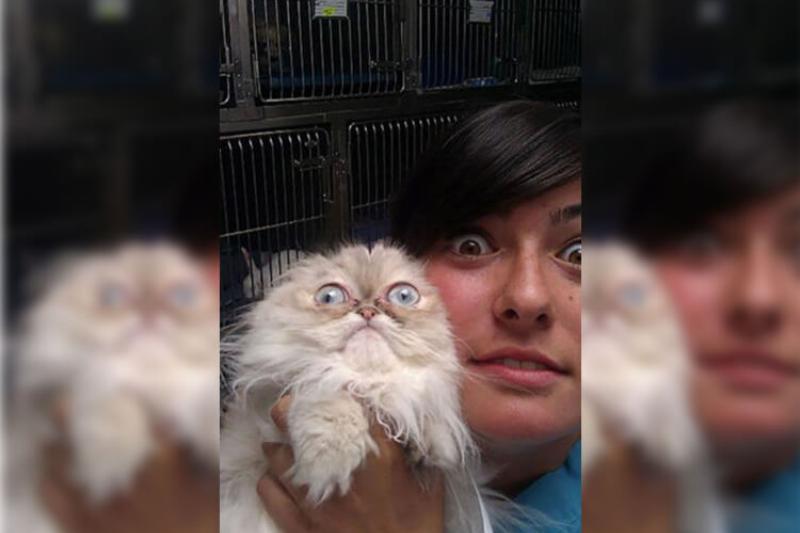 cat-scared-vet-21357-30753.jpg