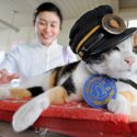 tama-the-cat-has-helped-boost-her-cities-economy-by-11-billion-yen-by-bein-35127-125x125-10085.jpg