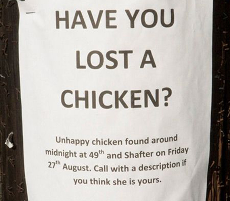lost a chicken? then call with a description
