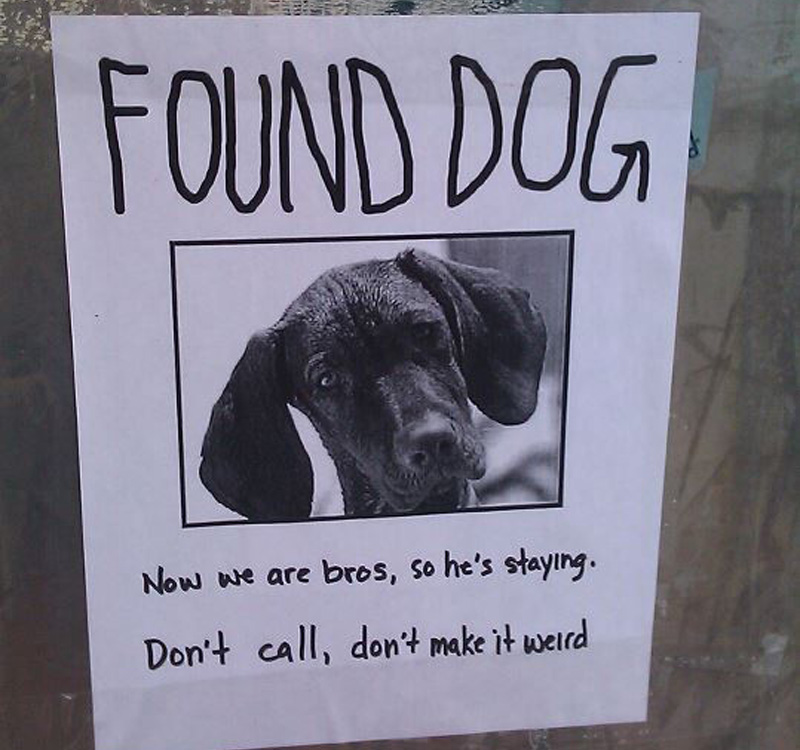 found dog is now friends with finder