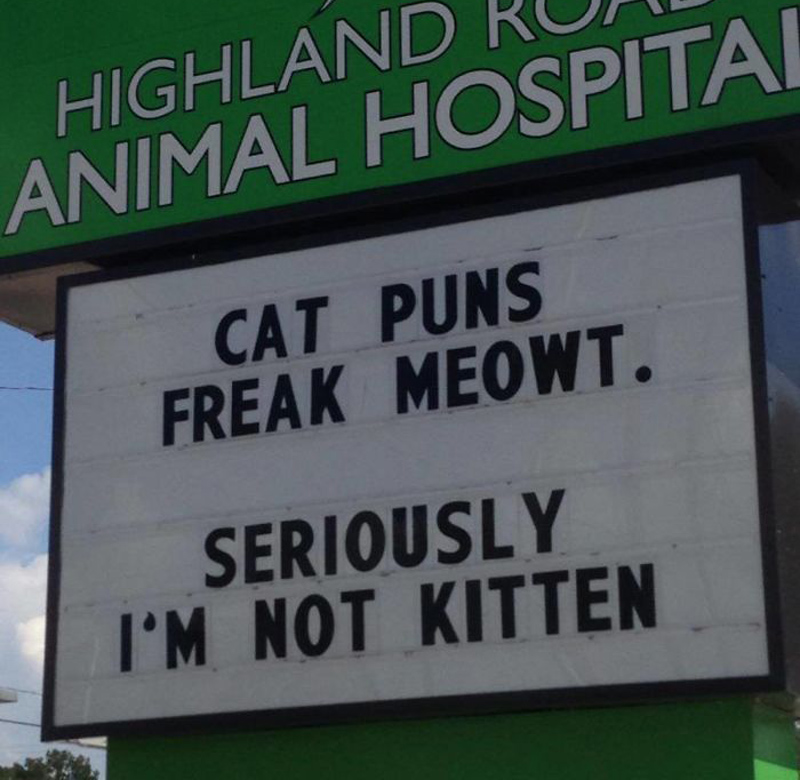 funny-veterinarian-signs- cat puns