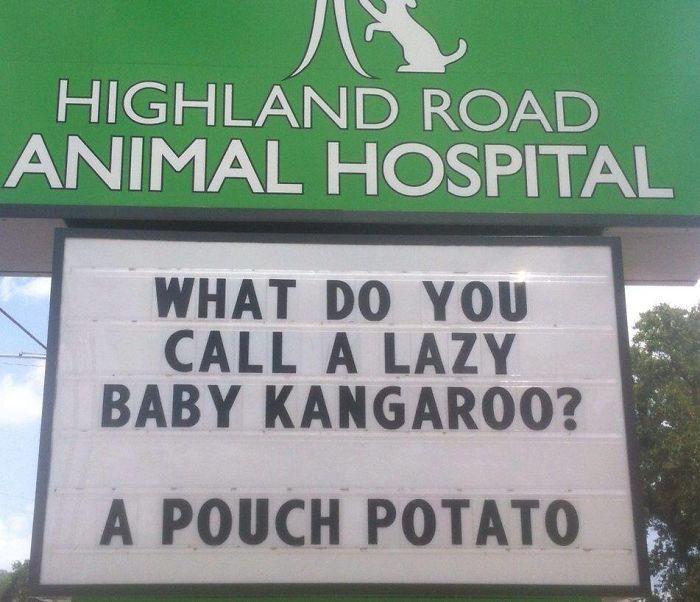 funny-veterinarian-signs kangaroo