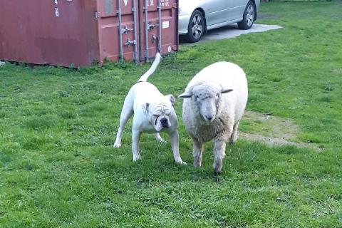 Lambo and Ollie