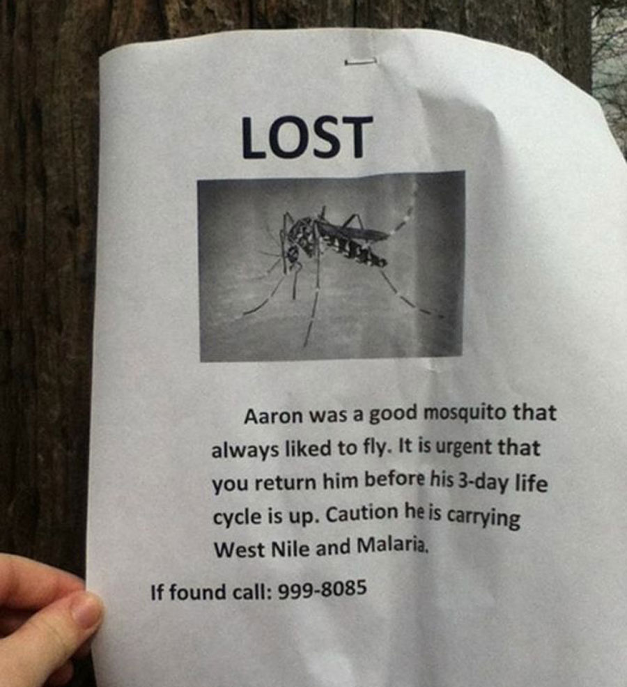 Aaron is a missing mosquito