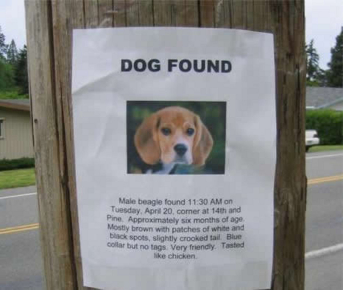 This sign says the missing beagle tasted like chicken