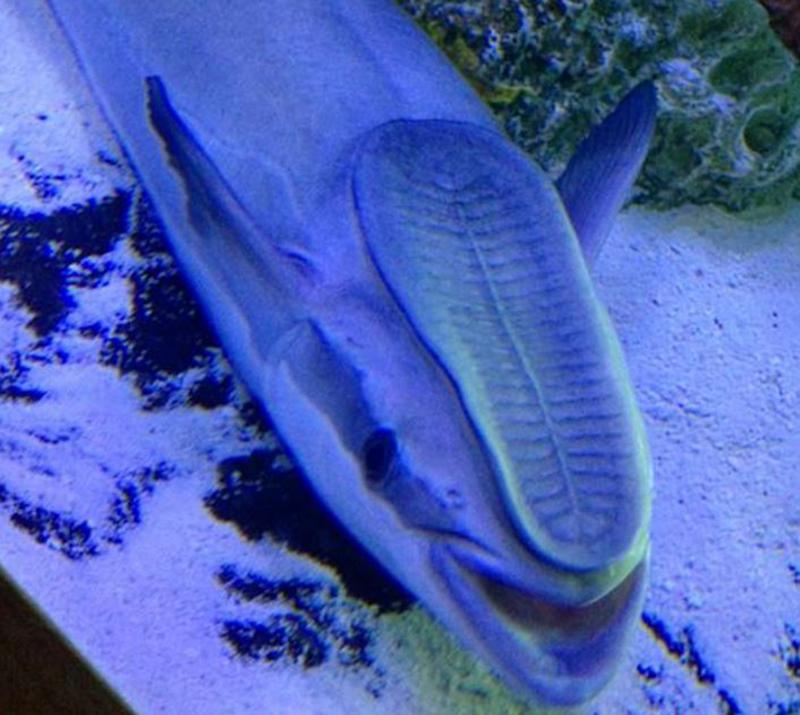 weird-aquarium-01