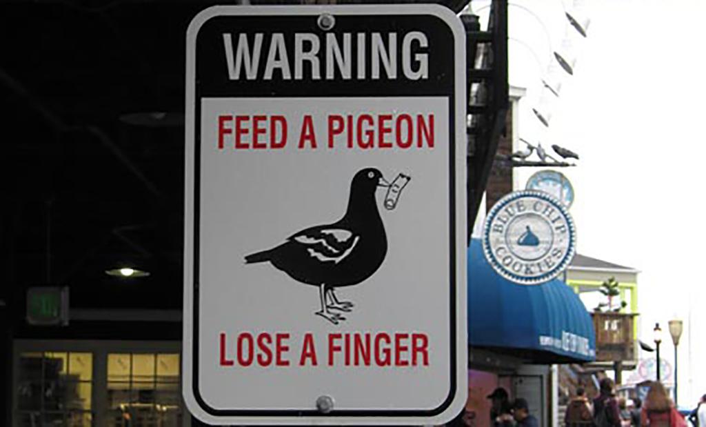 Pigeon warning sign