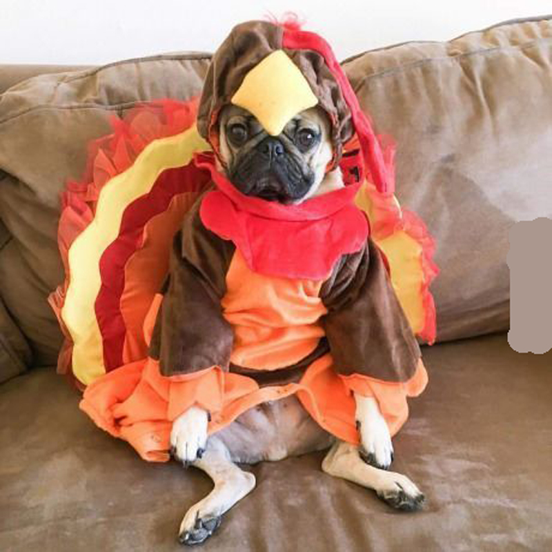turkey outfit