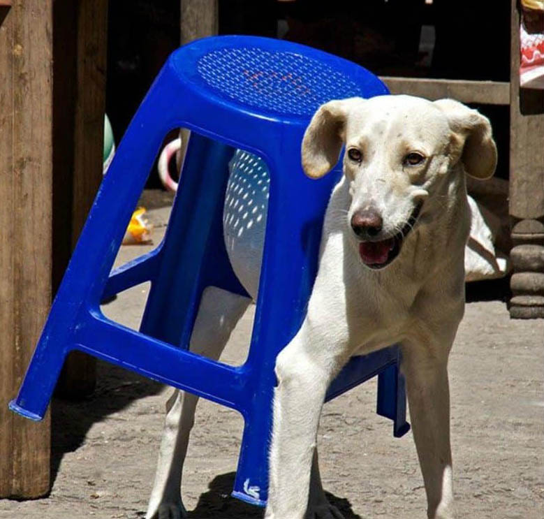 a dog stuck in a chair
