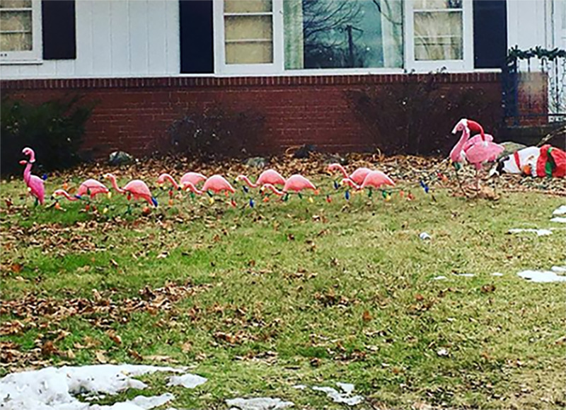 A yard has flamingos lined up like Santa's reindeer on display.