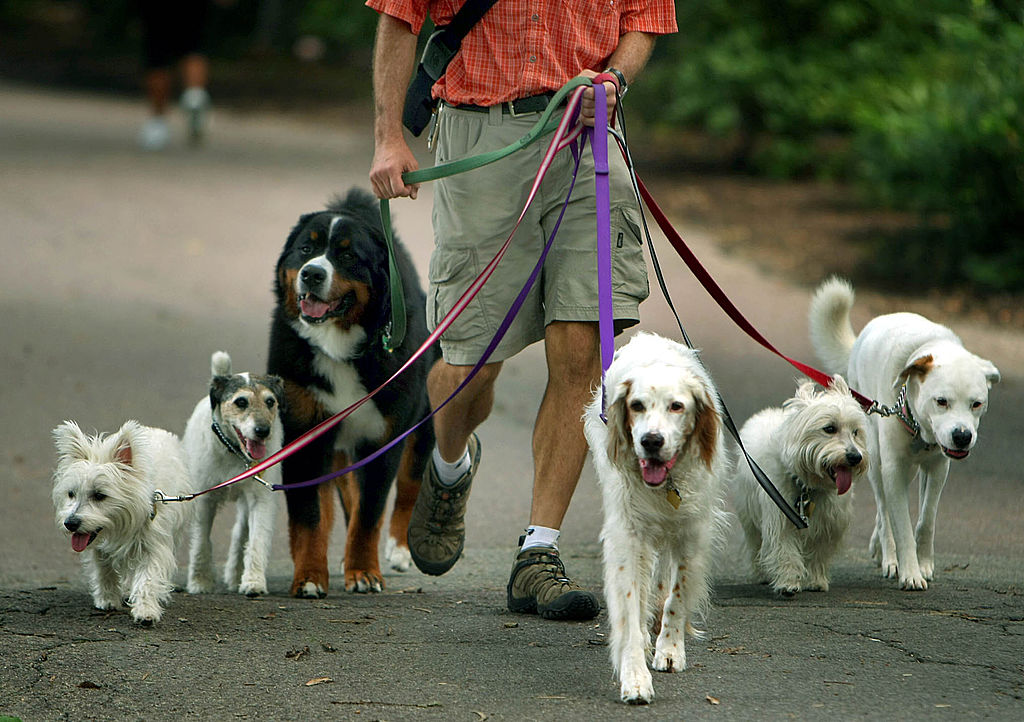 Your Dog Leash Best Be The Correct Length