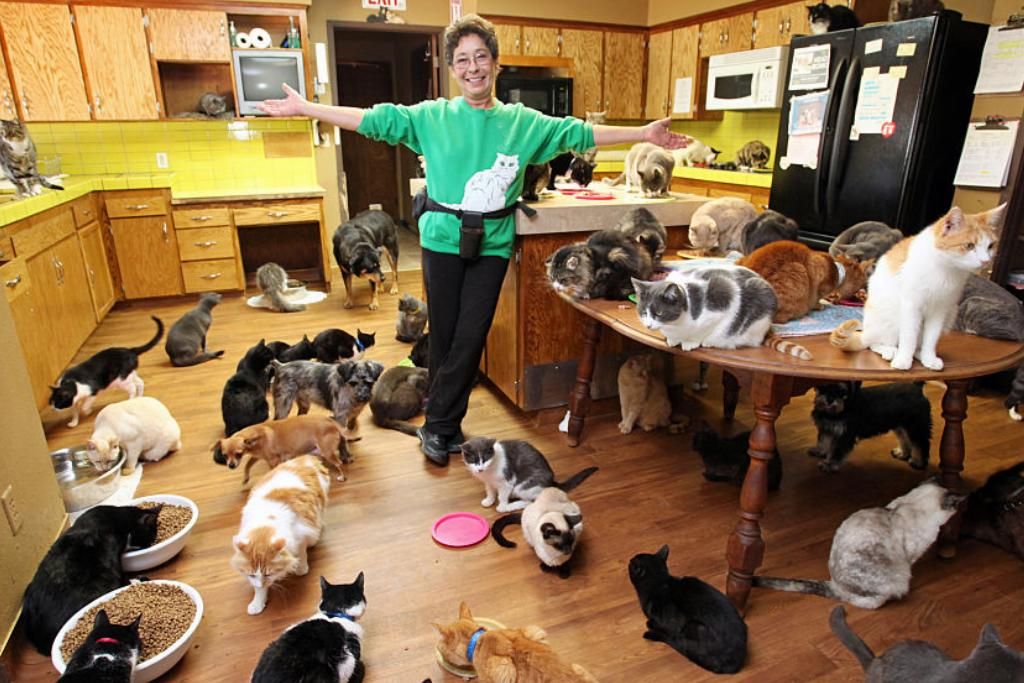 A cat owners spreads her arms to show off the dozens of cats in her home.
