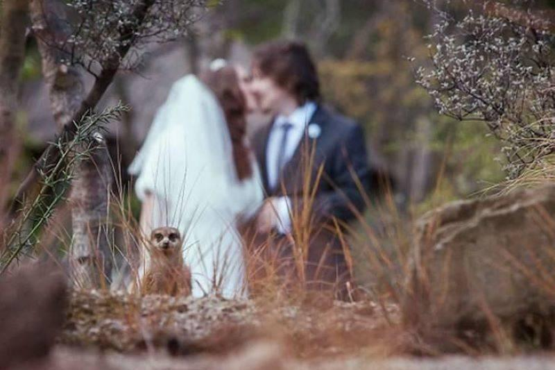 20 Hilarious Wedding Photobombs _ Funny - BabaMail