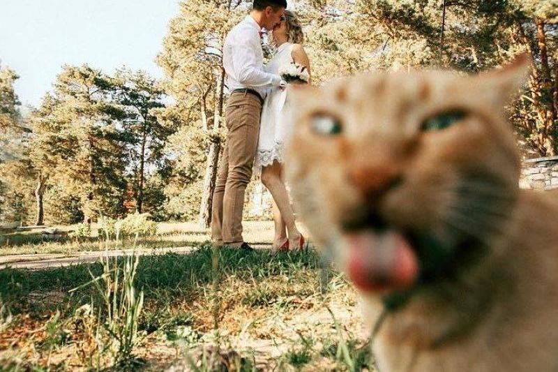 The Purr-Fect Way To Photobomb Mom's Happy Day