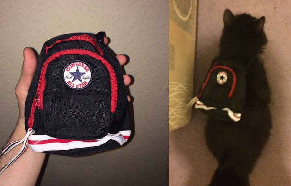 A backpack that someone bought online is small enough for a cat to wear.