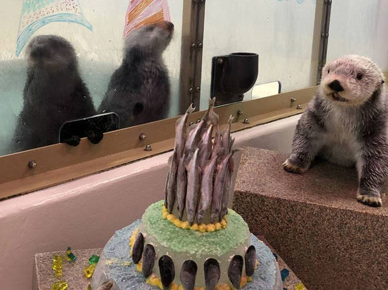 otter-birthday