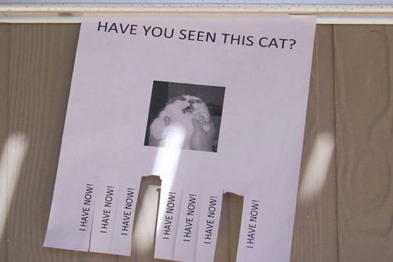 seen-cat