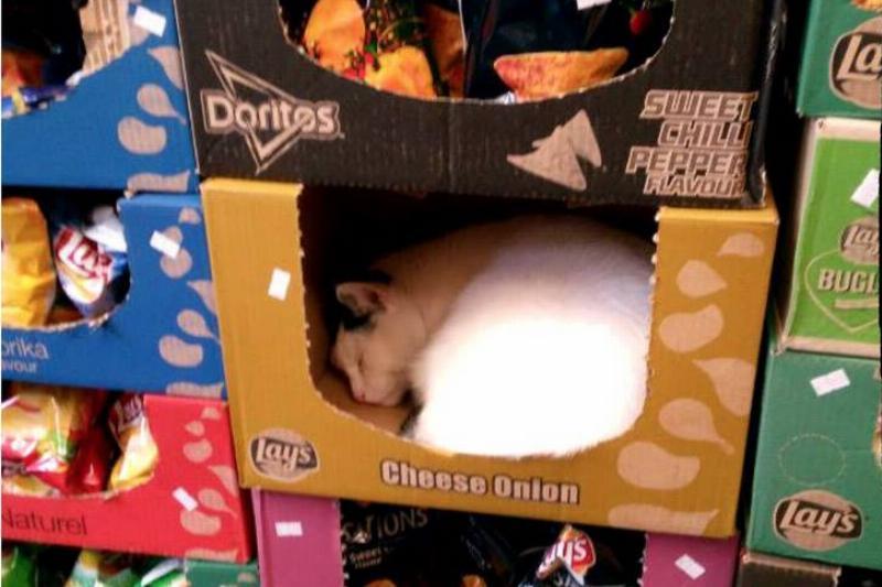 cat in box at walmart