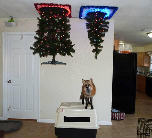 christmas-tree-pet-1