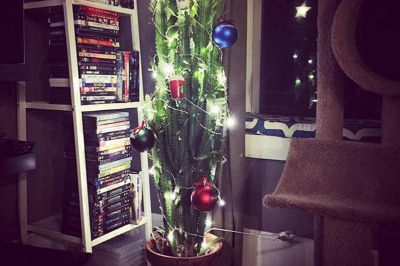 christmas-tree-pet-10