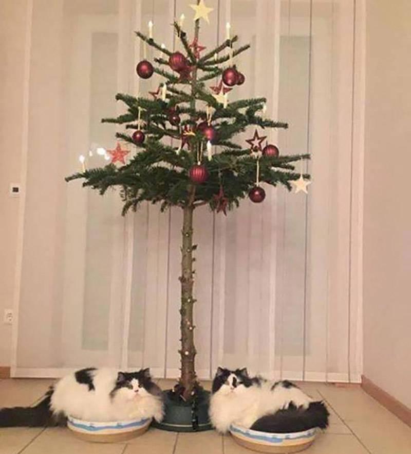 christmas-tree-pet-12-29480
