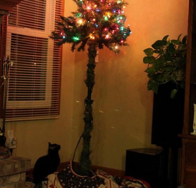 christmas-tree-pet-15