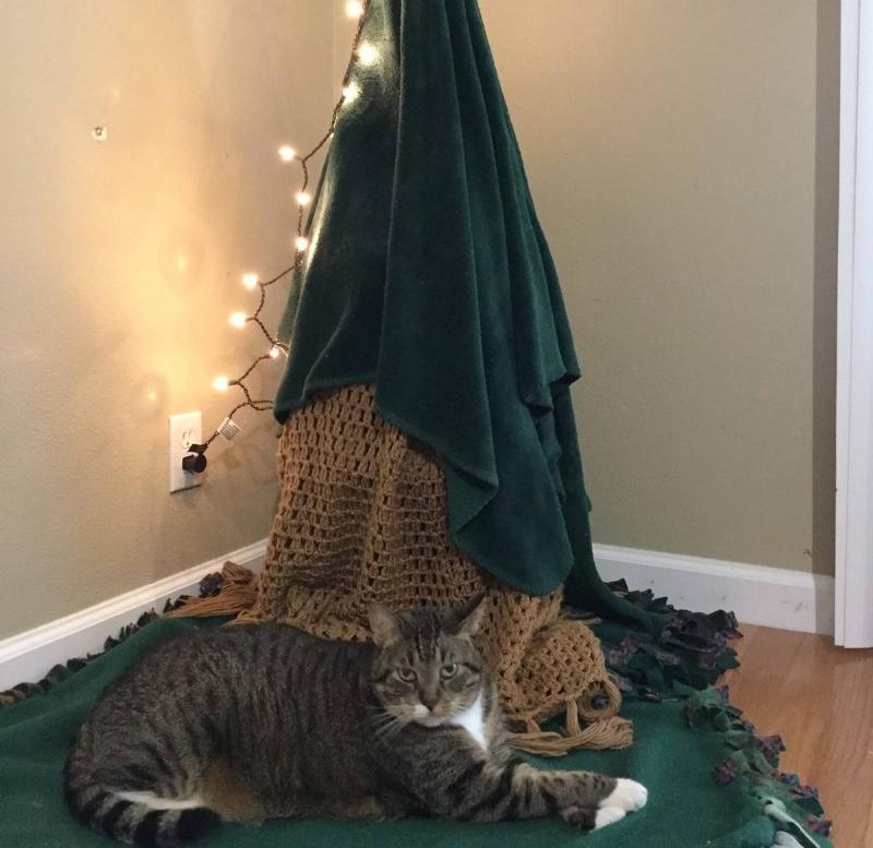 christmas-tree-pet-18