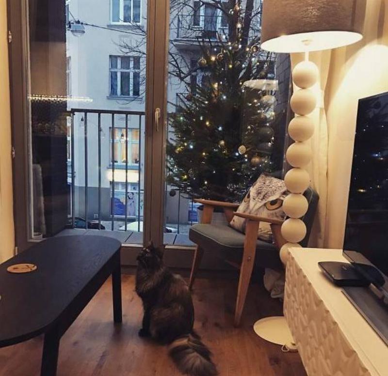 christmas-tree-pet-25