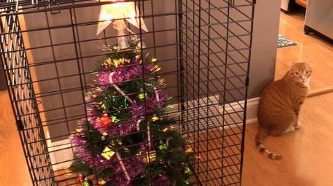 christmas-tree-pet