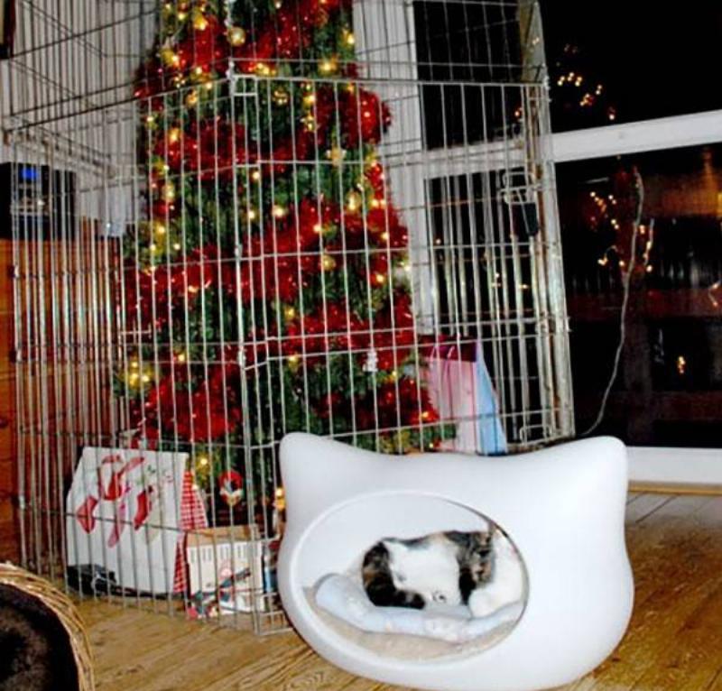 christmas-tree-pet-26