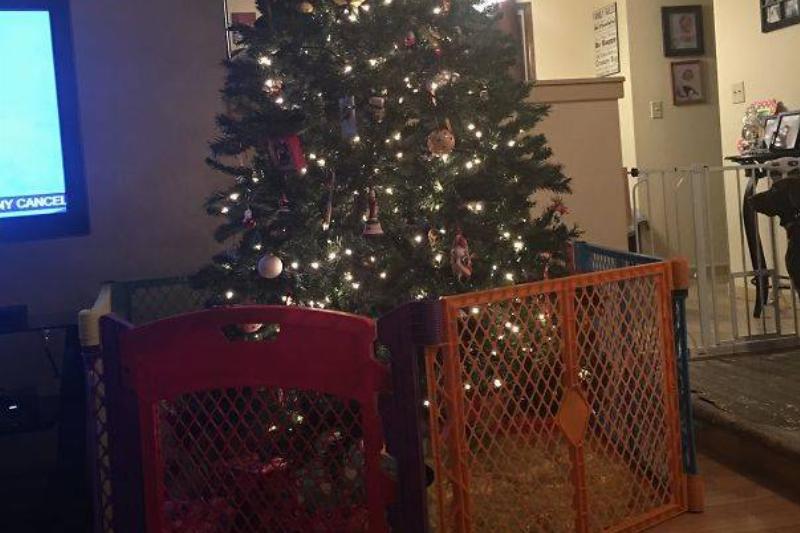 christmas-tree-pet-39
