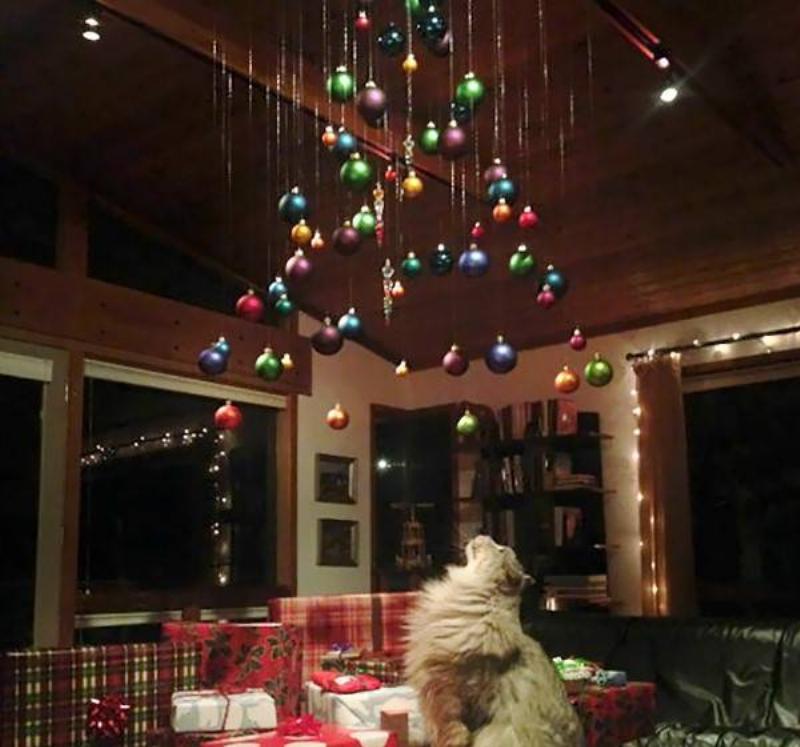 christmas-tree-pet-6