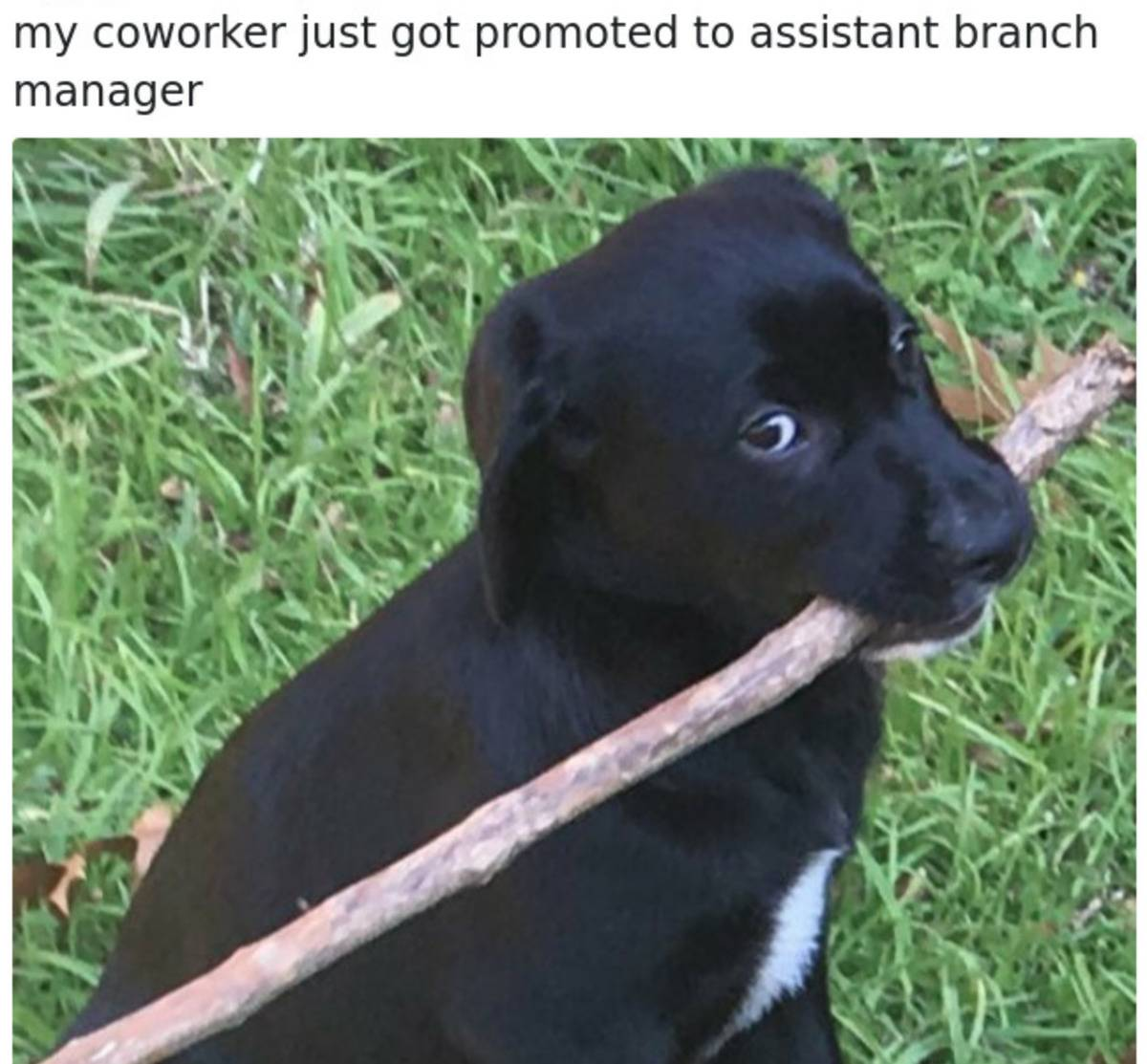 A puppy holds a giant branch, and the caption says,