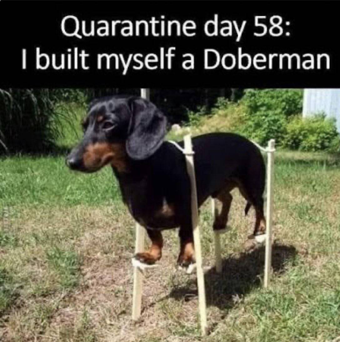 An owner creater stilts for his wiener dog to