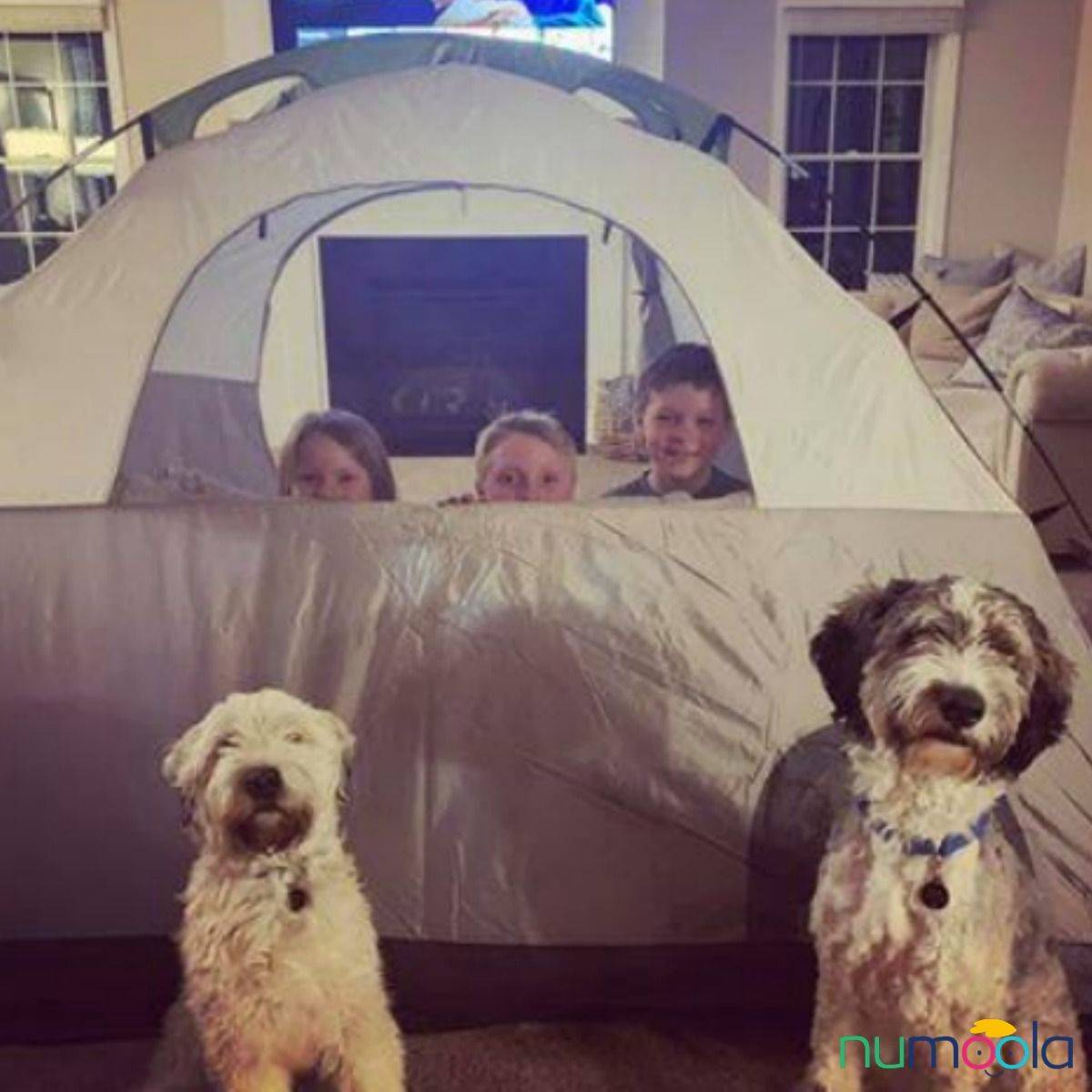 Three kids sit in a tent in a living room, and two dogs stand outside the tent.