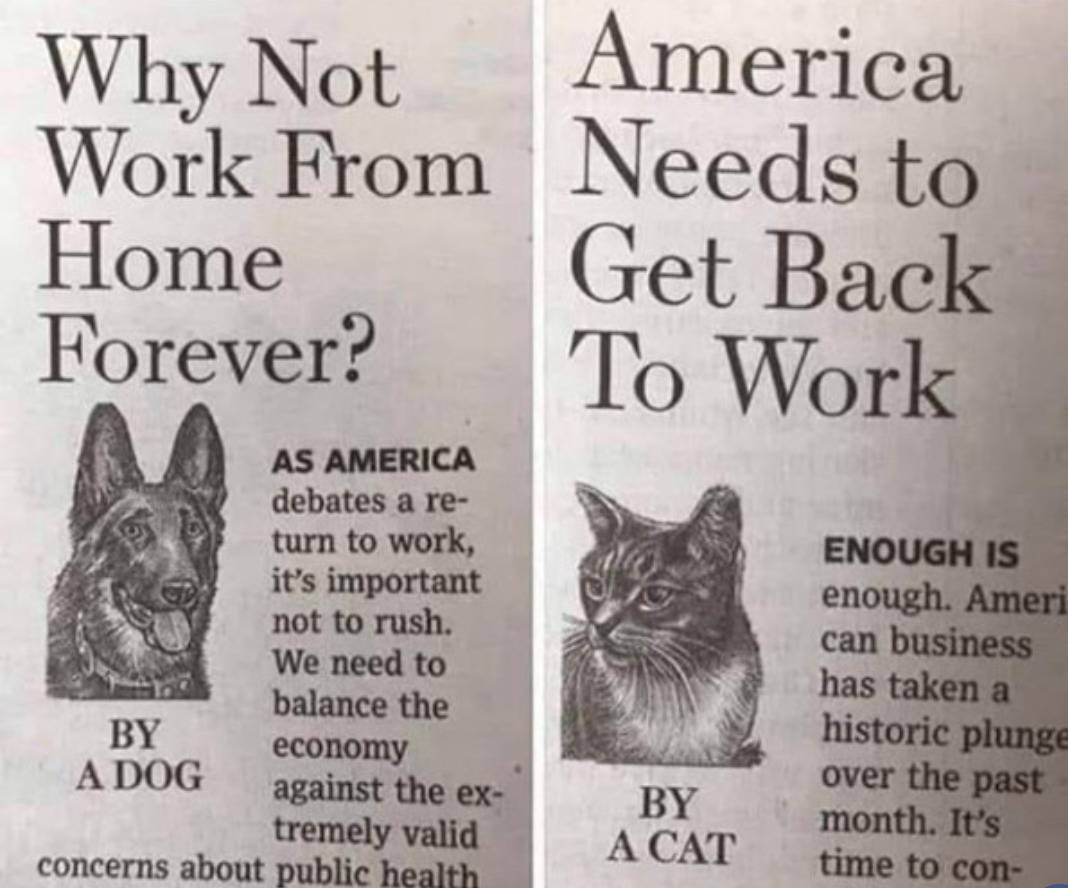 Satirical newspaper articles argue for owners to stay at home (dogs) and for them to go back to work (cats).
