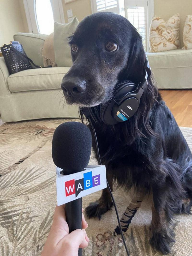 A radio host holds up a microphone to a dog.
