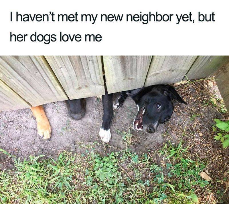 Two dogs try to go underneath a wooden fence to meet their neighbor.
