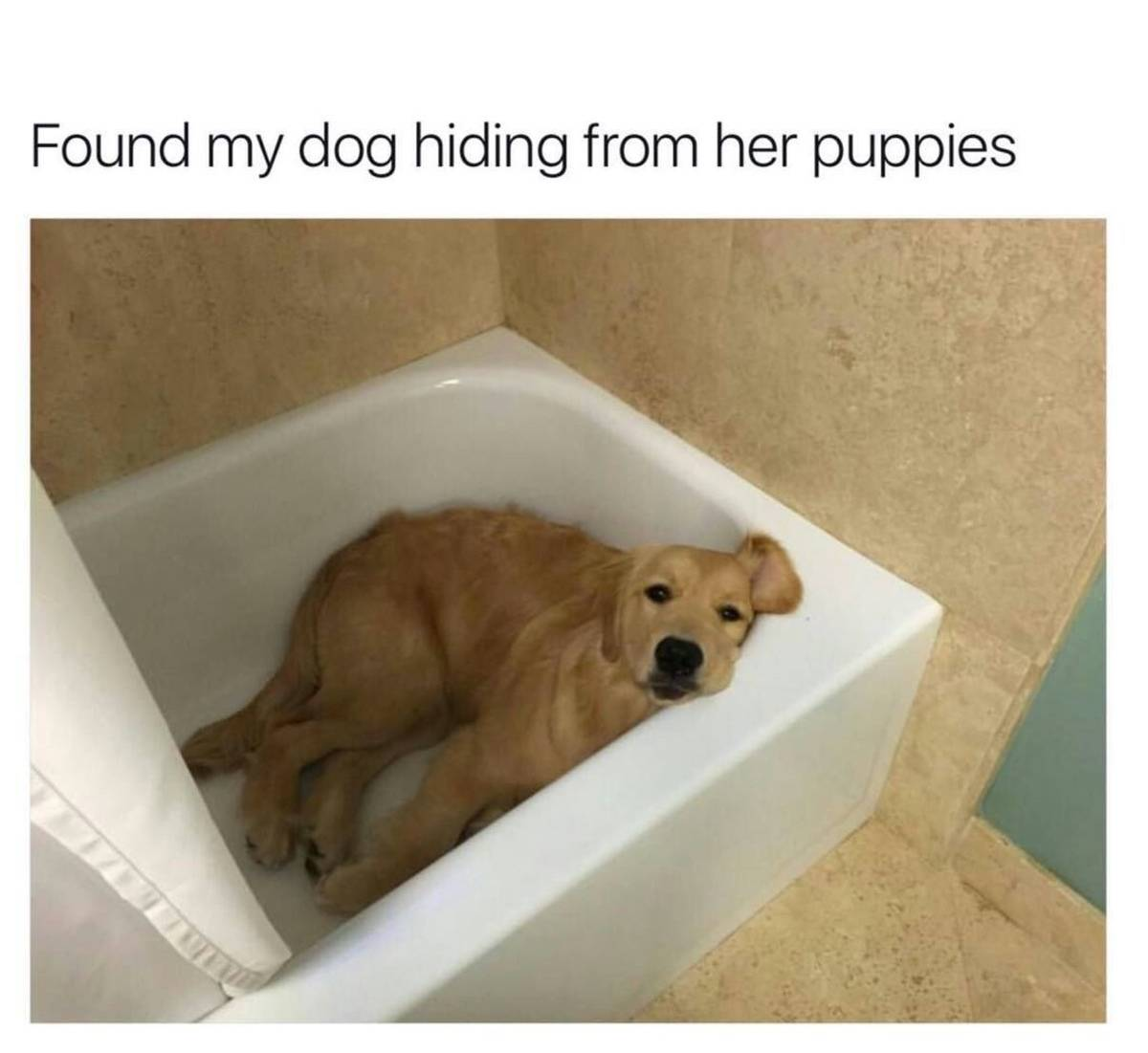 A dog mom hides from her puppies by lying in the bathtub.