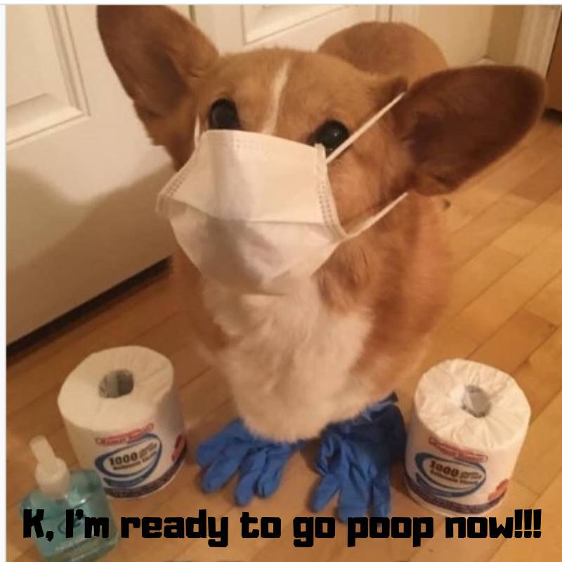 masked pup