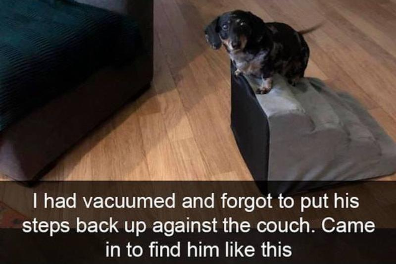 A Dachshund stands at the top of stairs, confused.