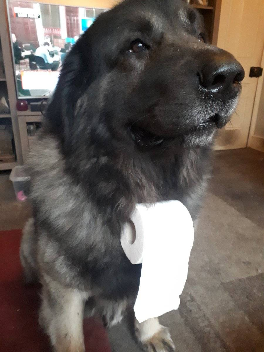 A roll of toilet paper hangs on a dog's collar.