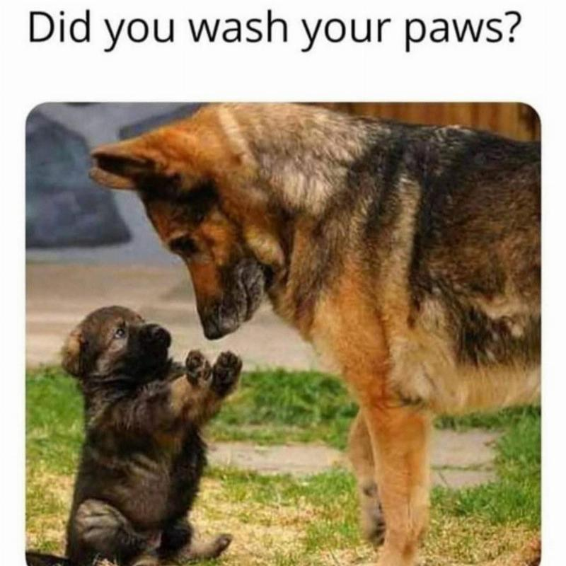 A puppy holds up his paws to a mother German Shepherd with the caption,
