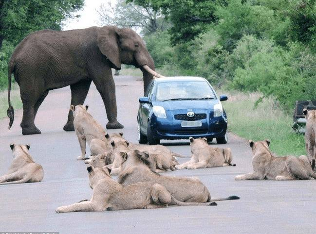 Picture of a car and animals